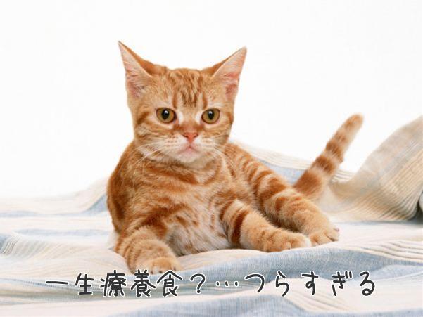 猫のストラバイト、療養食とのつきあい方その4
