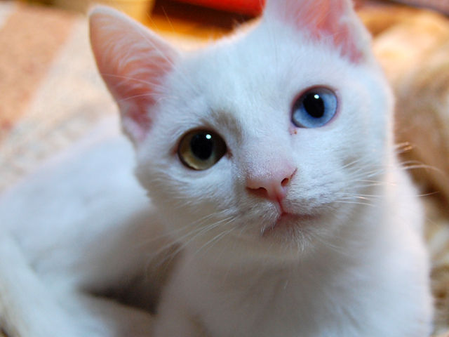 猫にはウェットフードがおススメ!