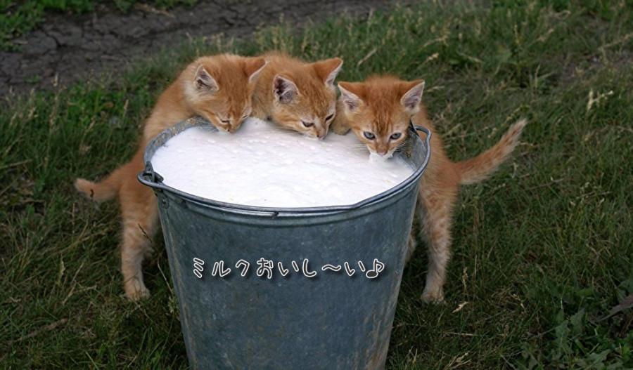 猫にはヤギミルクがおススメ